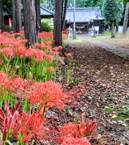 岩槻 篠岡八幡大神社